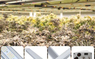 Is LED Grow Light a Good Choice for Growing Cannabis?